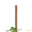 Kókuszrostkaró 80 cm