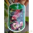 Akebia quinata /  ötlevelű akébia
