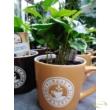 Coffee arabica / Arab kávé csészében
