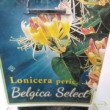 Lonicera periclymenum Belgica