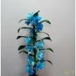 Dendrobium világoskék