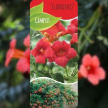 Campsis radicans Flamenco
