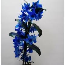 Dendrobium sötétkék
