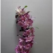 Dendrobium nobile pink
