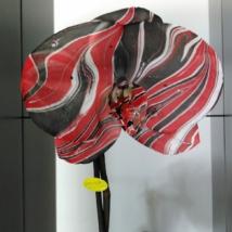 Phalaenopsis Singolo festett piros