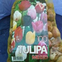 Tulipán mix 100 darabos