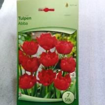 Tulipán abba