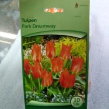 Tulipán park dreamway