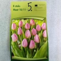 Tulipán Nr.5