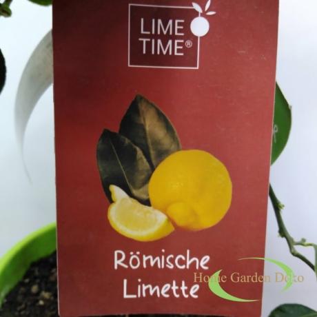 Citrus Römische limette