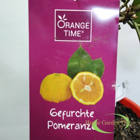 Citrus Sinensis Pomerance
