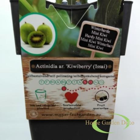 Actinidia arguta Kiwiberry (Issai) ⚥