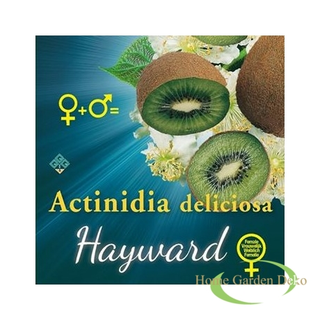 Actinidia deliciosa Hayward termő kivi ♀