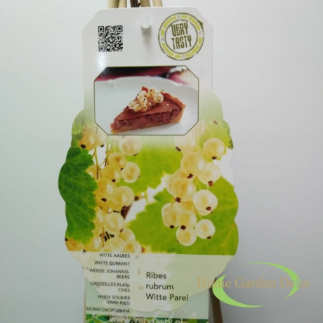 Ribes rubrum Witte Parel