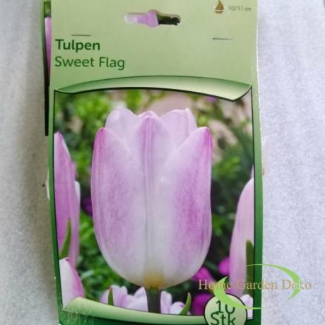 Tulipán sweet flag